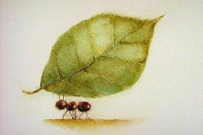 Detached Worker Ants